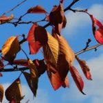 観葉植物の葉っぱが変色、枯れたときの対処方法を教えてください。
