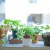 ひと目でわかる失敗しない観葉植物の選び方