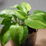 ハイドロカルチャーは水やりの練習に最適!植物の育て方の基本がわかります。