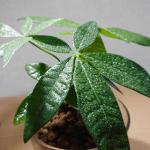 日かげの部屋でも育つ観葉植物。人気の7種類を本当に育ててみた結果報告!
