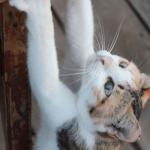 猫がドアを開けて困る!すぐにできる絶対ドアを開けられないようにする方法。