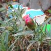 真冬にカーネーションが咲きそう!多肉植物も復活する自然のパワーの凄さにビックリ。