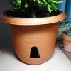 購入したコニファーの鉢に謎の穴を発見!底面潅水での水やりの方法と注意点。