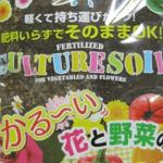 100均の土にご用心!選び方と使い方のポイント。虫がわいたり、キノコが生えるって本当?