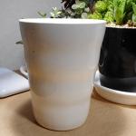 多肉植物のカップ型福袋!開封したらヤバいほどセダムがあふれでてきた。