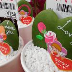 バレンタインデー限定の多肉植物がカワイイ!そのまま置けるハッピーインテイリア。