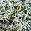 多肉植物の霜対策!そもそも霜って何?凍結や雪とはどう違うかを解説します。