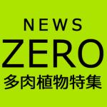 「NEWS ZERO」で桐谷美玲が多肉植物を特集!今なら期間限定で動画が見られます。