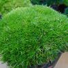 とっても不思議な「もふリッチ」の育て方。さわってみたくなるモフモフな植物が大人気です。