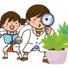 多肉植物は枯れないって本当?水やりをしないでどのくらい生きるのか調べてみた。
