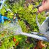 多肉植物の水やりの頻度やタイミングを知る方法!なるほど納得の発想にビックリ。