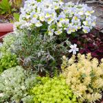 多肉植物は春の寄せ植えにも大活躍!何がおすすめ考えた結果、脇役を主役にしてみた。