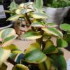 サルメントーサで多肉植物の育て方を覚えよう!水やりや挿し木もわかりやすくておすすめです。