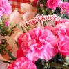 母の日にカーネーションをプレゼント!鉢植えや生花をおすすめしたい3つの理由。