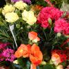 こどもが選ぶ母の日ギフトはカーネーションじゃなかった!パパと選ぶお花を見て嬉しくなった。