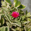 多肉植物に幸運の花がはじめて咲いた!ちいさな奇跡の訪れに、嬉しい連鎖反応が起こりました。