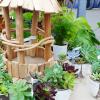 梅雨時の多肉植物のイチオシが予想外!インテリアグリーンフェアの展示即売会に行ってきました。