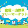 多肉植物は「盆栽・山野草フリーマーケット」が狙い目。ハオルチアが大特価の200円!