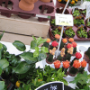 植物のフリーマーケットは宝の山!珍しい多肉植物やハオルチアが激安購入できます。