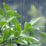 すぐにできる多肉植物の雨対策!梅雨時期だから絶対にやっておきたい3つのこと。