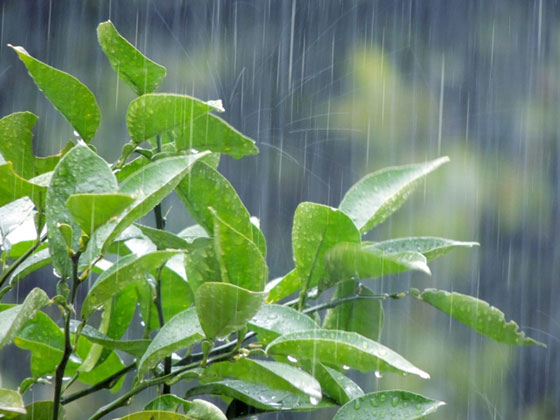 多肉植物の梅雨対策
