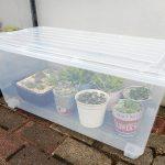 多肉植物を雨や台風から守る方法!超簡単に設置できる工具一切不要のアイデアに大感動。