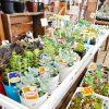 新潟市で多肉植物を買うなら細川洋蘭農園がおすすめ。品揃えと売場の規模がけた違いで大興奮!