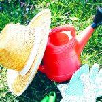 多肉植物の夏越しのポイントを聞いてきた!水やりや管理方法など元気に夏を乗り切るコツを紹介します。