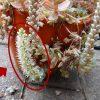 多肉植物は花が咲くと枯れるという説の検証結果!開花とその後の経過を報告します。