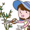 多肉植物の傷んだ茎は切っても大丈夫!徒長したり、腐ったりしたときの対処方法を解説。