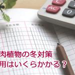 新潟市で初雪!多肉植物の冬越しや寒さ対策にかかる費用を公開します。