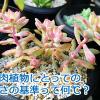 多肉植物に適度な寒さの基準は何度?リトルビューティーが綺麗な桃色に染まりました。