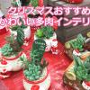 多肉ギフト大展開!クリスマス用のかわいい寄せ植えはインテリアにもおすすめです。