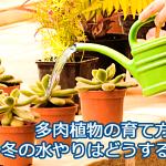 多肉植物の冬の水やりはどうする?断水や葉水は本当に必要なのかお答えします。
