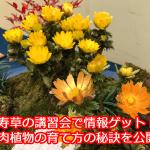 福寿草の無料講習で大収穫!多肉植物に共通する超重要な育て方の情報を公開します。