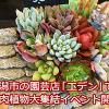 多肉植物、エケベリアが大集結!新潟市の園芸店「エデン」が多肉祭り状態です。