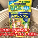 多肉植物に肥料は必要?マグアンプKをセンペルビウムに試すことにしました。