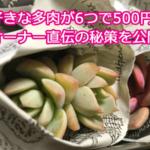 多肉狩りの戦利品を公開!6つで500円をもっと楽しむ方法を聞いてきた。