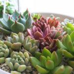 狭くても大丈夫!多肉植物がよく育つ置き場所づくりを100均でバッチリ対策。
