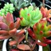 全部本物お手本にしたい多肉植物!意外な共通点と綺麗に色づいたポイントは?