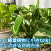 ギャ!観葉植物に小さな虫が出た!すぐにできる対処方法と備えておくべき1つのもの