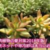 多肉植物の夏対策2018年版!暑さや日差し対策に遮光ネットや寒冷紗は必要?
