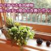 【保存版】室内で育てる多肉植物が失敗しやすい理由と改善したい3つのポイント!