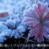 多肉植物は霜に弱い!ブヨブヨにしない霜対策の方法