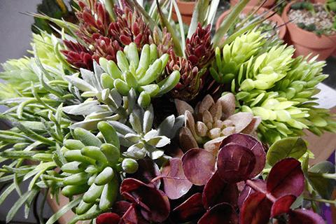 フェイク多肉植物