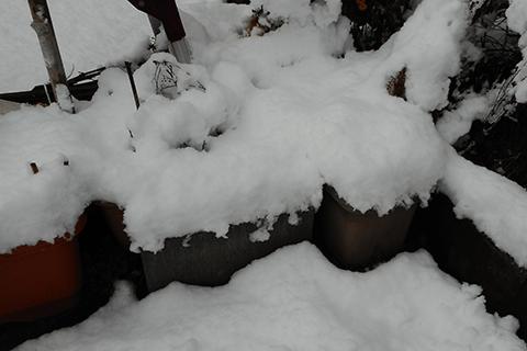 多肉植物、雪
