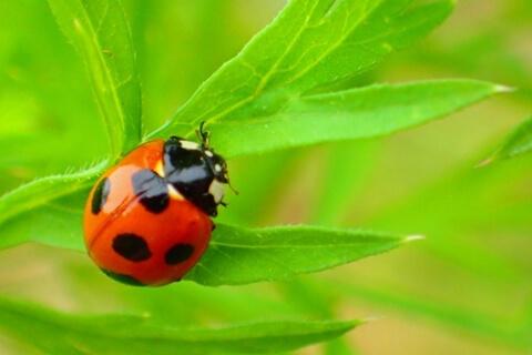室内で虫がつきにくい観葉植物はありますか。まずは環境づくりが大切です。