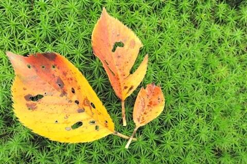 多肉植物の葉の黒い点。黒点病と決めつけてはいけません。