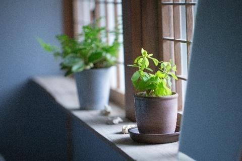 室内で育てる植物がなかなか成長しない理由は、温度管理だけではありません。