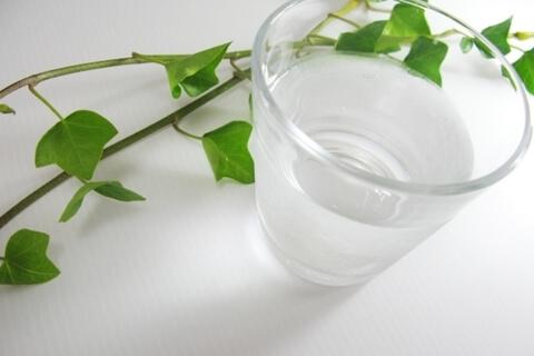 アイビーやポトスは水挿しのまま育てられますか。植え替えをしますか。
